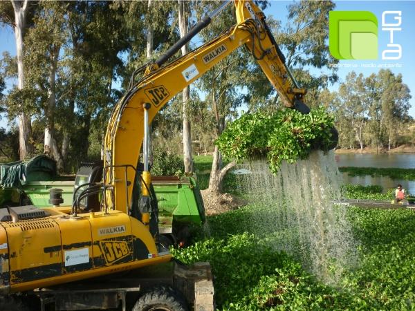 Comienzan las actuaciones de conservación, mejora y mantenimiento del estado del dominio público hidráulico en un tramo del río Guadiana afectado por Eichhornia Crassipes y actuaciones asociadas.