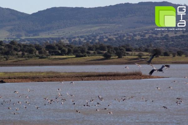 Finalizan los trabajos de restauración, repoblación y tratamientos selvícolas en bienes patrimoniales de Confederación Hidrográfica del Guadiana en el embalse de Gargáligas (Badajoz).