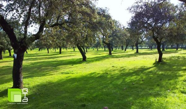 Ayudas Forestales en Andalucía