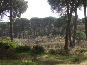 Diagnóstico Socioecoambiental en el ámbito del Espacio Natural de Doñana