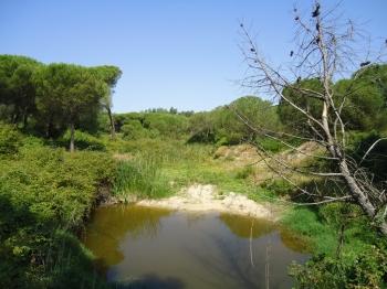 Restauración ambiental de cauces y espacios degradados en el Condado de Huelva