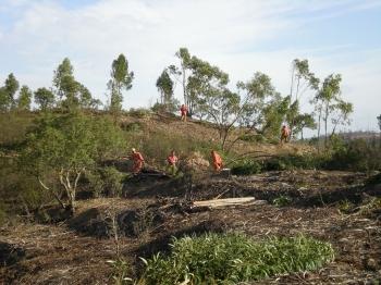 Tratamientos selvícolas y mejora de hábitats en la presa del Andévalo y ribera del Chanza
