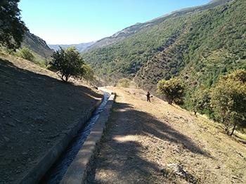 Asistencia técnica para la dirección de trabajos de prevención de incendios forestales en diferentes fincas propiedad de Endesa Andalucía